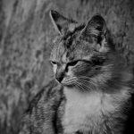意気消沈した猫